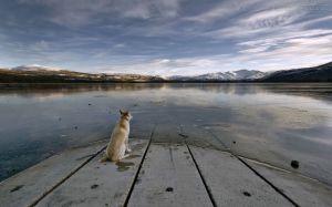 Cachorro-parado-no-lago_1280x800